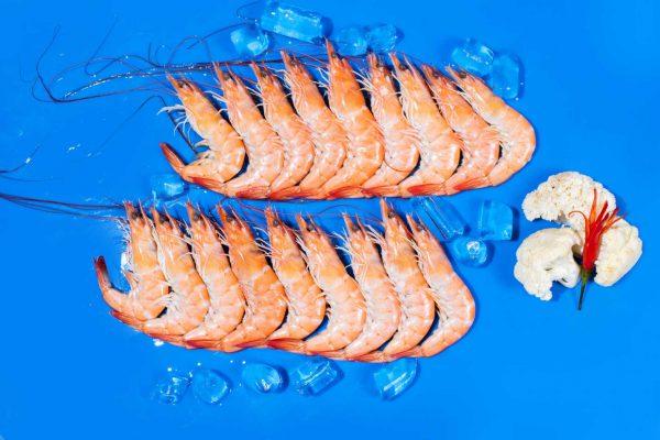Shrimp55