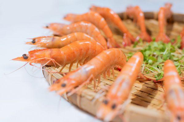 Shrimp61